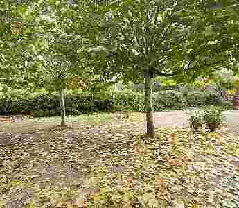 Jardines y zonas verdes_41
