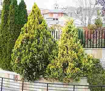Jardines y zonas verdes_65
